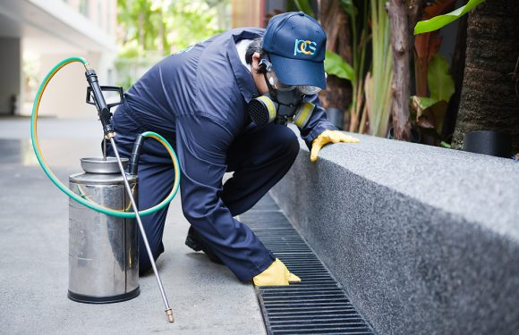 What is the Need for Pest Control Services?