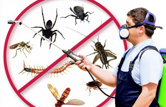 How Do You Select the right Bedbug Exterminators?